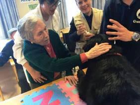 geriatricarea AMMA terapia asistida con animales