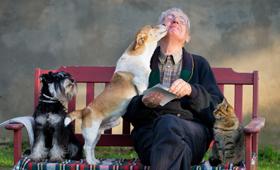 geriatricarea mascotas bienestar mayores