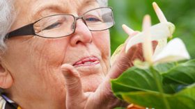 Sanitas apuesta por la botánica artística para mejorar el bienestar de los mayores