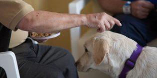CREde Alzheimer imparte cursos sobre danzaterapia e intervención asistida con perros