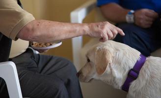 geriatricarea CREde Alzheimer intervención asistida con perros