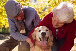 geriatricarea convivencia mascotas