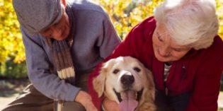 Las mascotas aportan múltiples beneficios a nivel físico y emocional a las personas mayores