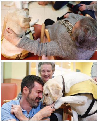 geriatricarea terapias con animales mayores