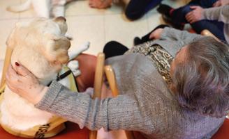 geriatricarea terapias con animales residencias de mayores