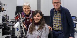 Determinan la concentración crítica de agregados de beta-amiloide Ab-42 que precipita el Alzheimer