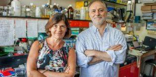 Un estudio internacional analiza cómo influye la dieta y la microbiota en la progresión del Alzheimer