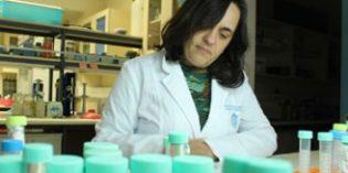 CARE Chile estudia las propiedades de un alga contra el infarto cerebral, Alzheimer y cáncer