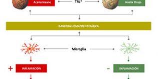 Los compuestos bioactivos del Aceite de Orujo de Oliva pueden proteger frente al Alzheimer
