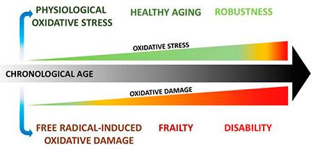 geriatricarea envejecimiento fragilidad