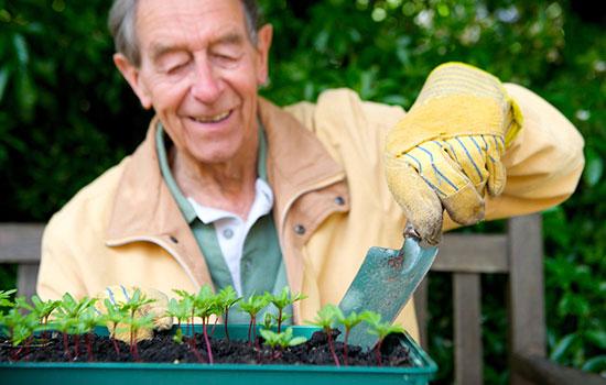 geriatricarea jardineria sanitas mayores