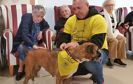 geriatricarea domusvi terapia asistida con animales