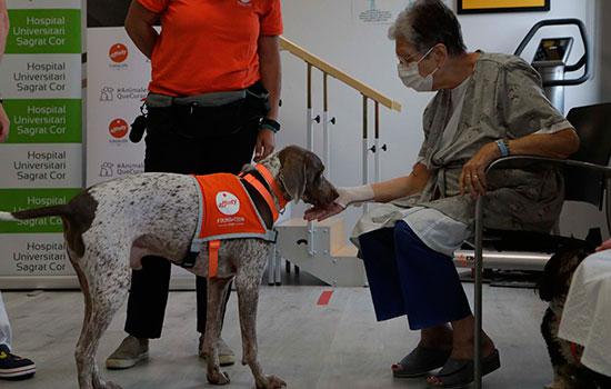 geriatricarea terapia asistida con perros